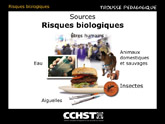 Risques biologiques